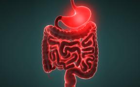 gastroenterites